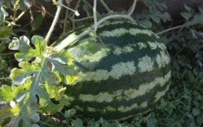 Cool Weather Gardening in Nevada County
